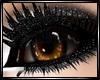 !I Brown Eye's