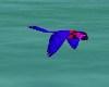 FLYING PARROT #3