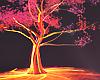 Neon Tree Photoroom