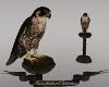 Con/Falcon