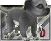 |KD| Grey Baby Pitbull
