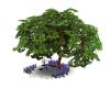 Romantic Swing Tree