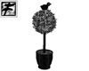 ~F~ Blackbird in a Tree