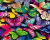 [SM] Frame Butterflies