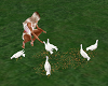 Feed The Doves Animated