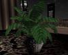 {DS}Dark Elegance Plant