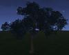 Midnight Tree {F}