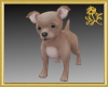 Chihuahua Puppy Pet