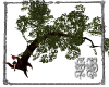 SB Arching Tree