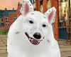 TF* My Dog Radar