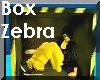Box Zebra