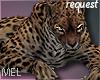 Mel*Leopard pet /Req.