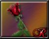R1313 Single Rose