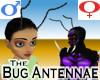 Bug Antennae -v1a