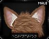 . chico | ears