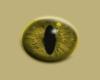 Male Animal Eyes