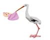 stork baby