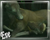 c Wild Deer