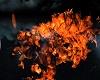 fire hellhound dj light