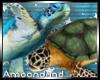 AM:: Sea Turtles Enh