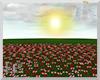 EC| Pink/Red Rose Field
