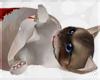 !© Christmas Kitten