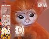 . Monkey