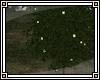 Ambrosia Tree