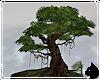 !Old Oak Tree