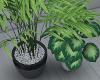 Duo Plants