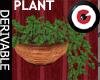 Hanging Ivy planter