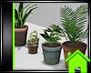 ! HOUSE PLANT