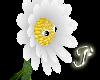 ~P~Luthien's Pal Daisy
