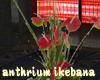 anthurium ikebana