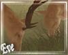 c Fun Deers