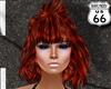 SD Gracie Phoenix