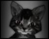 Shoulder kitty