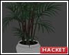 H@K Green Plant