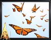 Butterflys Animated