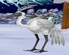 snow-white big bird Anim