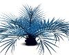 Blue Leaf tree