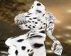 dalmation furry hair (F)