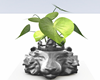 :3 Silver Lion Plant