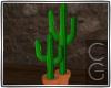 CG | Country Cactus