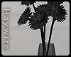 :Black Daisy Vase
