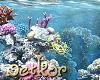 Reef: under water