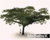 [X]Flat Tree
