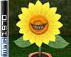 Sunflower Plant Trap