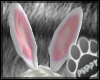 [Pup] Bunny Ears