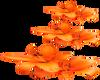 Orange Tulips -R